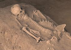 Skeleton human bones. Human body skeleton with bones covered by dirty sand royalty free stock photography