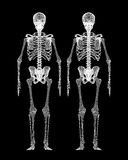 Human body, skeleton Royalty Free Stock Photos