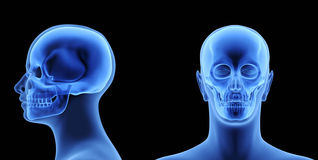 The Human Body - Skull Royalty Free Stock Photography