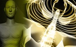 Human body and spine. Digital illustration of a human body and spine Royalty Free Stock Photo