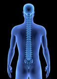The Human Body - Spine Royalty Free Stock Photos