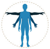 Human body structure Stock Image