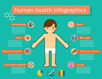 Human body systems medical infographics Royalty Free Stock Photo