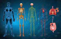 Human body systems. The various human body systems and organs Royalty Free Stock Image