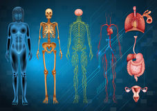 Human body systems Royalty Free Stock Photography