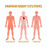 Human Body Systems. For web and Print use Stock Photo