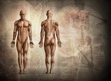 Human body Stock Photos