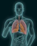 Human body with visible inflamed lungs 3d render Stock Images