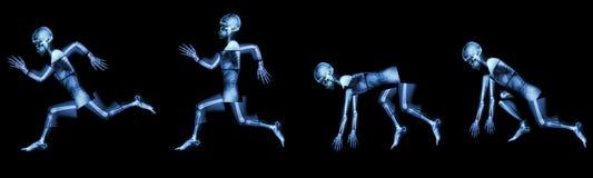 Human bone is running. (step of run a race stock image