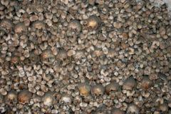 Free Human Bones Royalty Free Stock Images - 779129