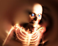 Human Bones 8 Royalty Free Stock Photos