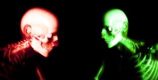 Human Bones 92 Royalty Free Stock Image