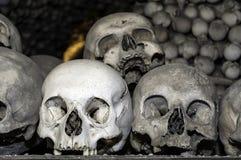 Human bones. Royalty Free Stock Image