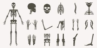 Human bones orthopedic and skeleton silhouette. Collection set on white background, bone x-ray image of human joints, anatomy skeleton flat design vector royalty free illustration