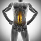 Human bones radiography scan image Royalty Free Stock Photography