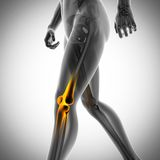 Human bones radiography scan image. Human bones radiography scan. x-ray  image Royalty Free Stock Photography