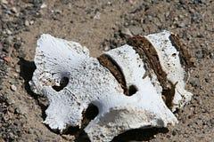 Human Bones. Sun bleached spinal column of a Pre-inca human lies in the dirt at this cemetary near Nazca, Peru Stock Photo