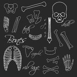 Human bones white outline symbols on blackboard Stock Photo