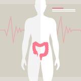 Human Bowel Health Illustration Stock Photo