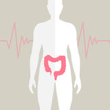 Human Bowel Health Illustration Stock Image