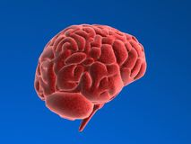 Human brain Royalty Free Stock Image