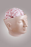 Human brain. A brain opened head of a man Royalty Free Stock Images