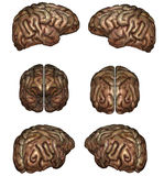 Human brain. 3D rendered human brain on white background isolated Stock Photo