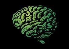 Human brain. Isolated silhouette green illustration Stock Photo