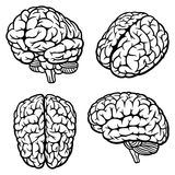 Human Brain. Set of four views. Vector Illustration royalty free illustration