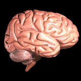 Human brain. 3d human brain isolated on dark background Royalty Free Stock Images