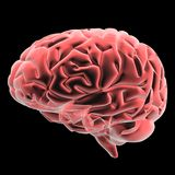 Human brain. 3d human brain isolated on dark background Royalty Free Stock Photo