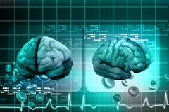Human brain. Digital illustration of Human brain Stock Photos