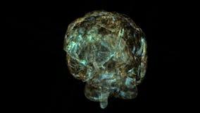 Human Brain. Animation of a Human Brain