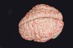 Human brain. On a black background royalty free stock images
