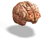 Human brain Stock Image