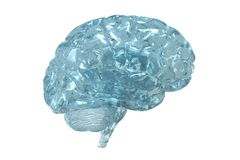 Human Brain Royalty Free Stock Photography