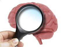 Human Brain Analyzed with magnifying glass blank copy space inside Royalty Free Stock Images