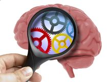 Human Brain Analyzed with magnifying glass cogwheels working inside isolated. On white vector illustration