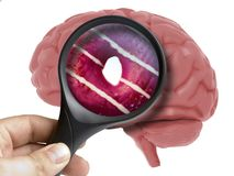 Human Brain Analyzed with magnifying glass donut sweet inside addiction isolated. On white stock illustration