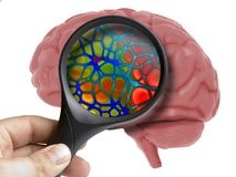 Human Brain Analyzed with magnifying inside isolated. On white vector illustration