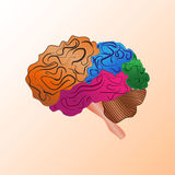 Human brain anatomy. Colorful illustration of human brain anatomy Royalty Free Stock Photos