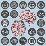 Human brain anatomy. Set of multiple views. Left Brain versus Right Brain. Vector illustration royalty free illustration