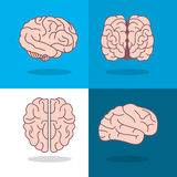 Human brain and angles icon image Royalty Free Stock Photo