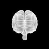 Human Brain anterior view Royalty Free Stock Photo