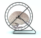 Human brain with arms and legs in hamster wheel Royalty Free Stock Photos