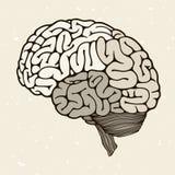 Human brain. On a beige background, vector illustration Stock Photo