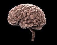 Human brain on black with clipping path Stock Photos