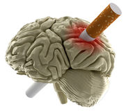 Human brain with Cigarette (clipping path included) Stock Photography