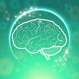 Human brain in circle Stock Photography