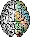 Human brain color Royalty Free Stock Image